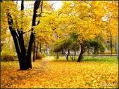 mùa thu vàng.